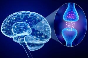 החדשות הטובות: אפשר לשנות את המוח